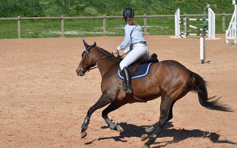 horseback-1-pixabay