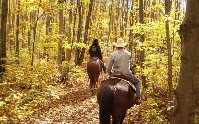 horseback-3-pixabay